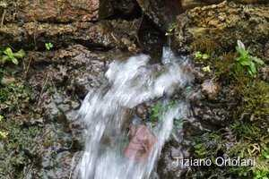 rock water fiori di bach